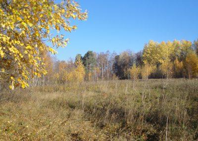 Områdets inre hagmark om hösten