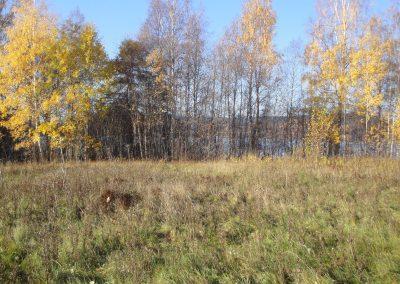 Hagmarken om hösten