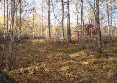 Lövskogen mellan området och vägen