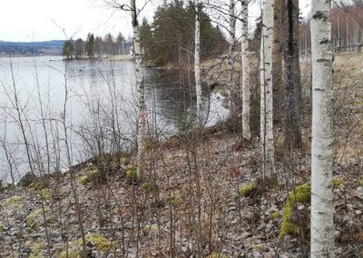 I skogen nära näset mot Grangärde
